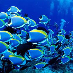 工体富国海底世界