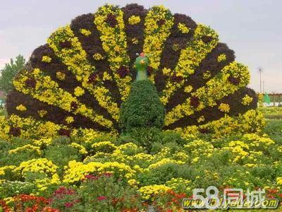金盏郁金香花园