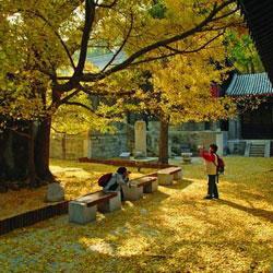 西山大觉寺