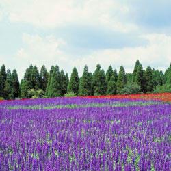 紫海香堤艺术庄园
