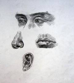 鼻子素描的结构图 素描头像鼻子结构 素描鼻子图