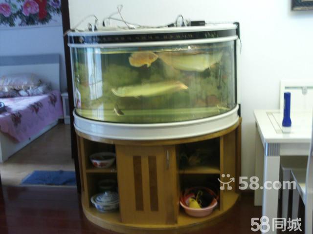 招财猫鱼哪里买卖比较好的 招财鱼活体价格 高清图片